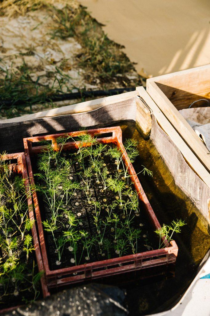 Recette velouté haricots verts - reportage photographie food Lyon - Besly